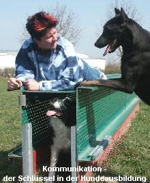 Training mit Hunden in Augsburg